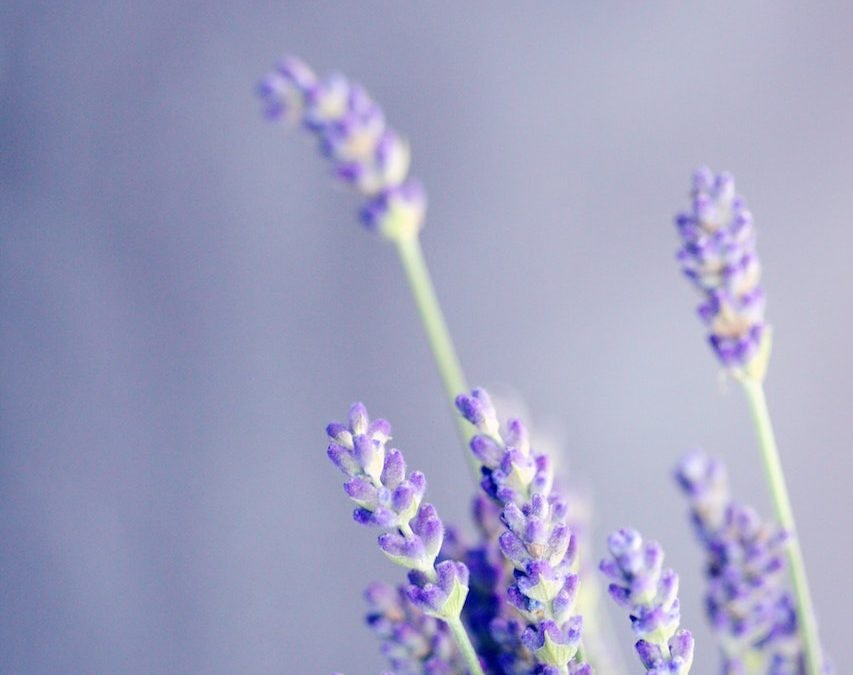 Boost Hair Growth With These Essential Oils
